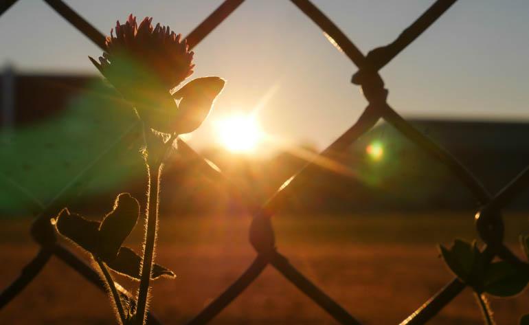 flower dawn-1400356