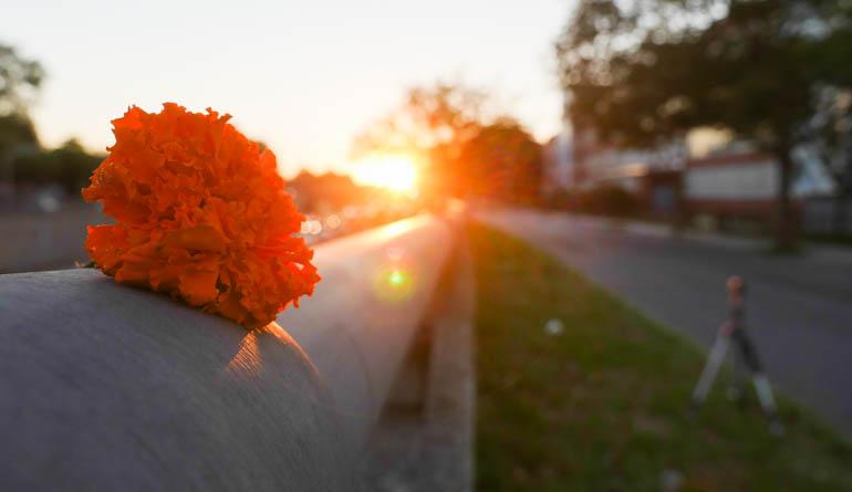 flower dawn-1400678