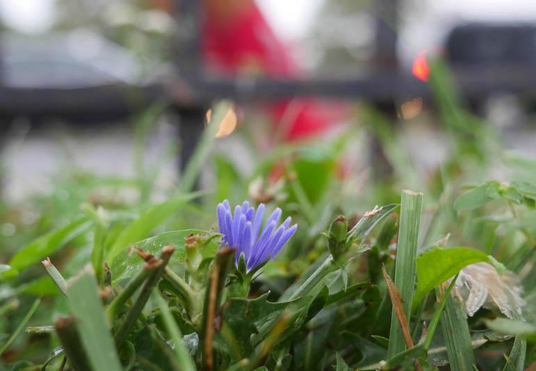 flower final-1390625