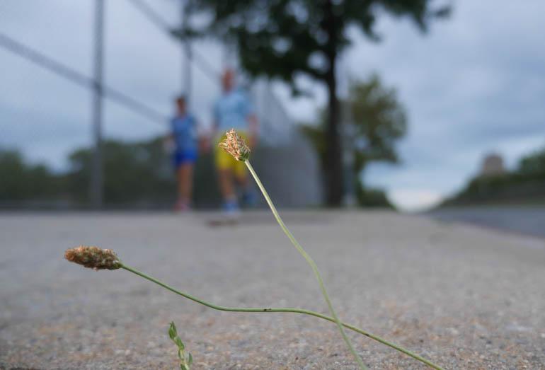 flower final-1390981