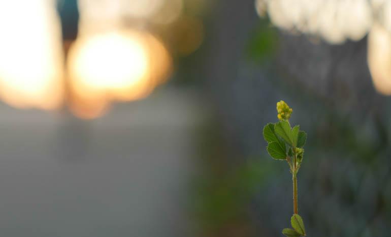 flower final-1420206