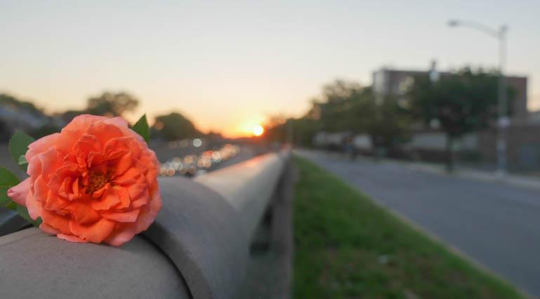 flower gc-1420205