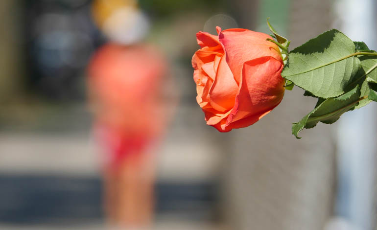 flower kaneenika-1410175