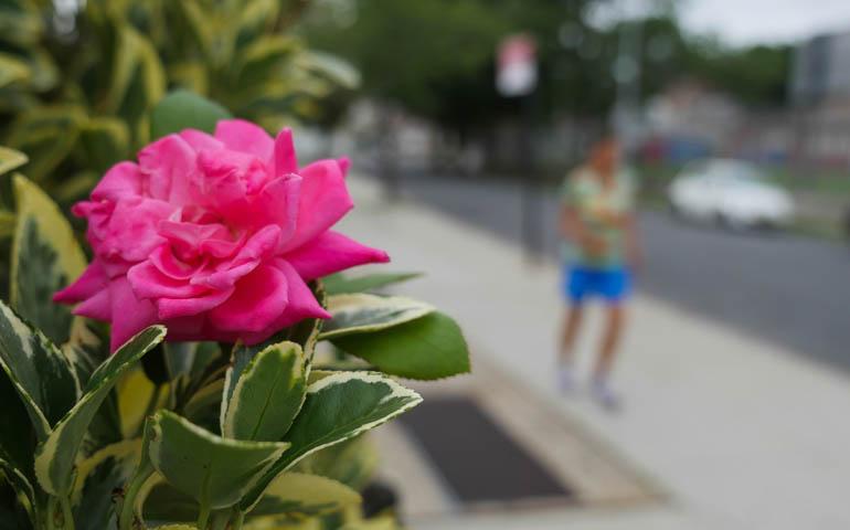 flower kaneenika-1410530