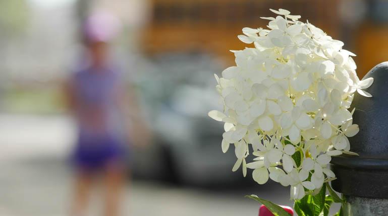 flower kaneenika-1420158