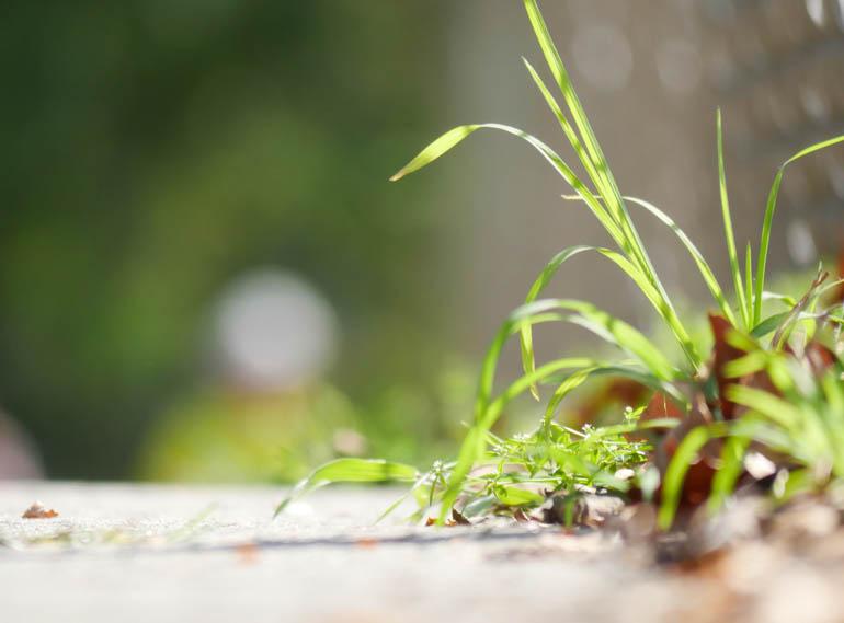 flower stutisheel-1420408