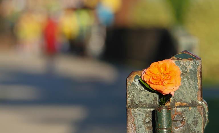 flower surasa-1420310