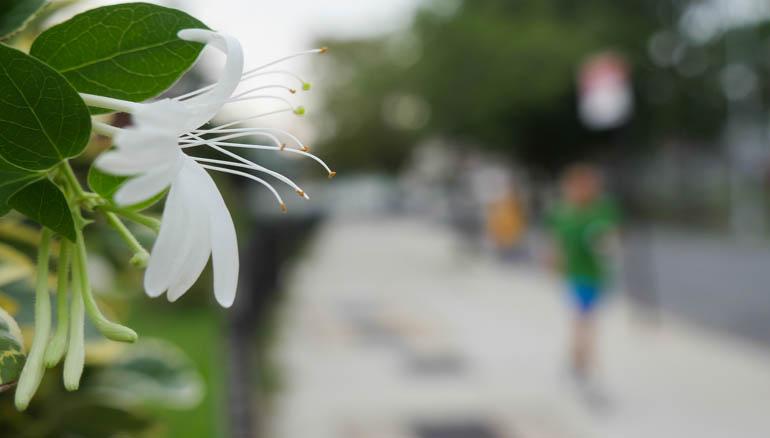 flower vasu-1410408