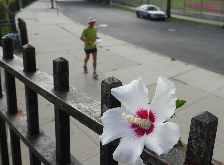 flower vasu-1410553
