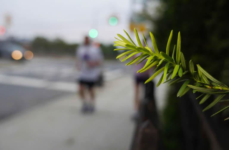 flower yuri-1390623