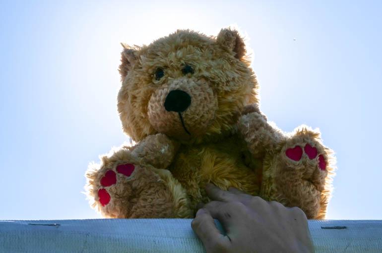 bear-1000094