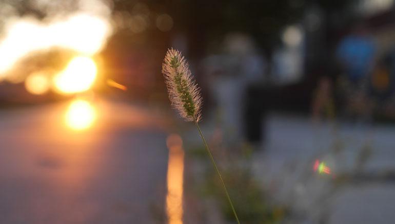 flower-gold