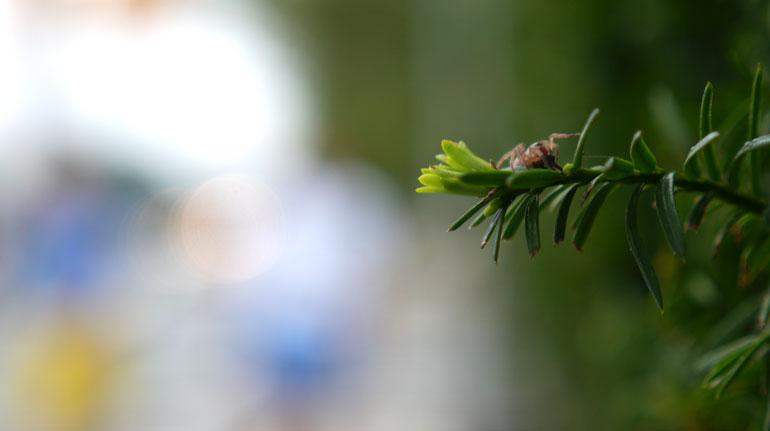 flower12