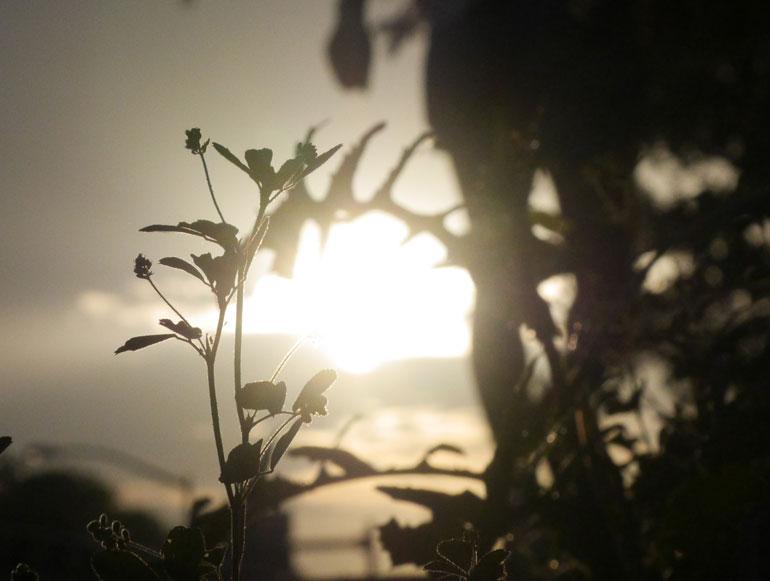 sun-floer