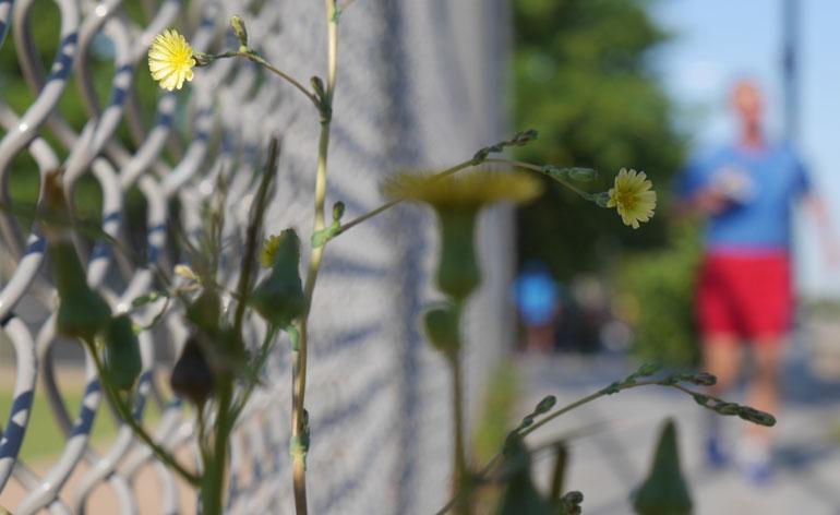 flower-ashprihanal2