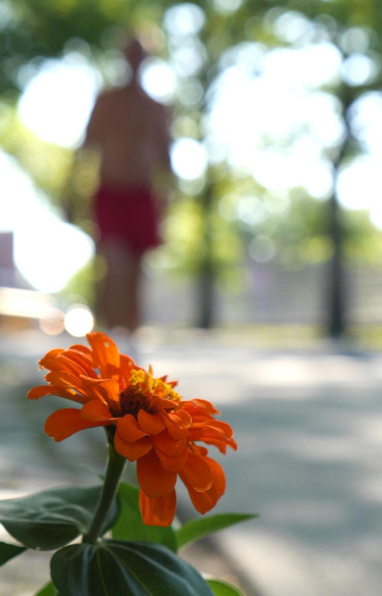 flower-ray