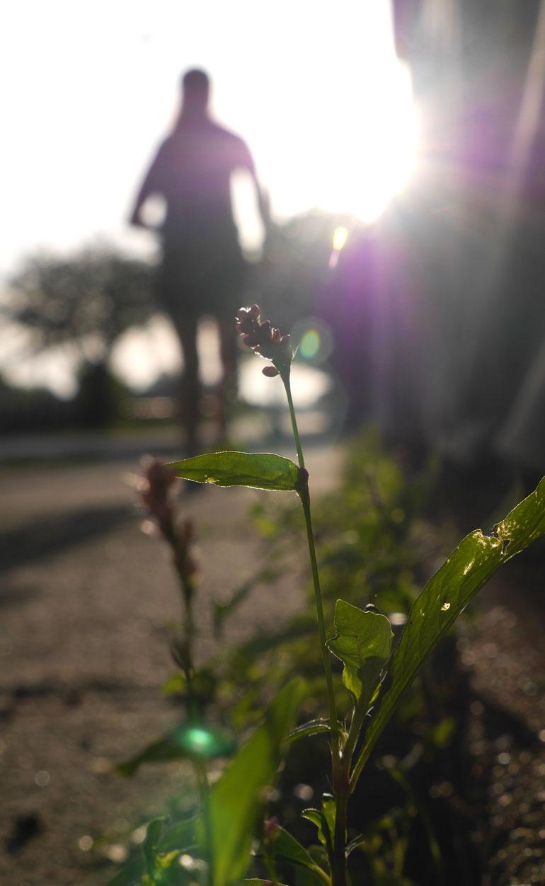 flower-sarah