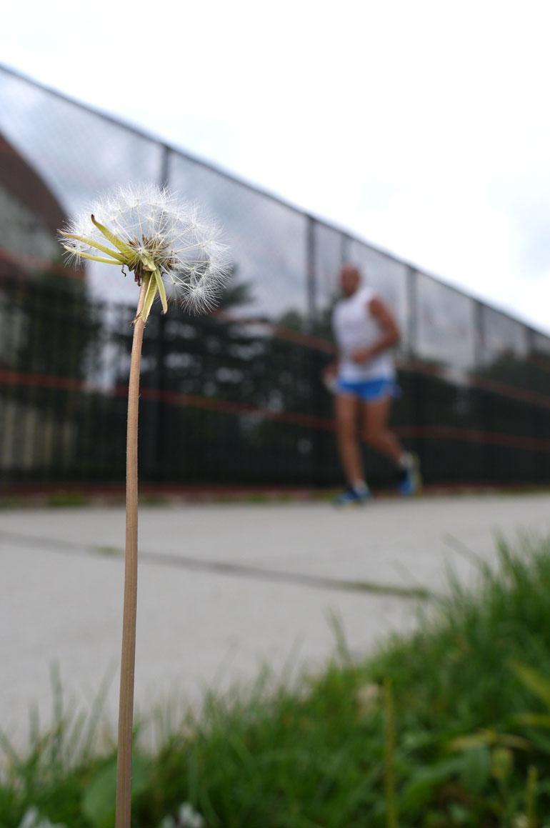 flowersarvagata
