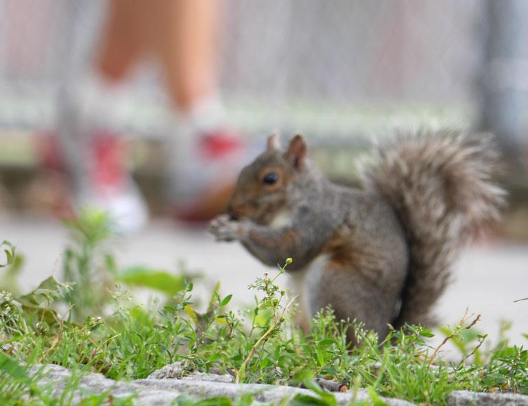 floer-squirrel2