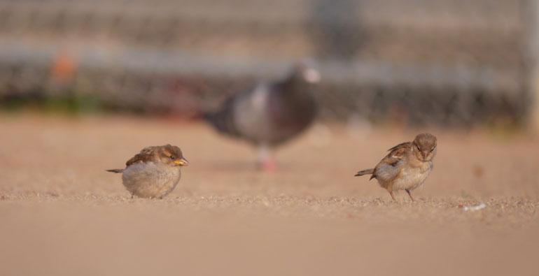 flower-2-birds