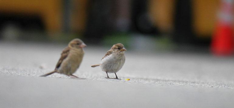 flower-bird2