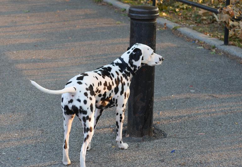 flower-dog2