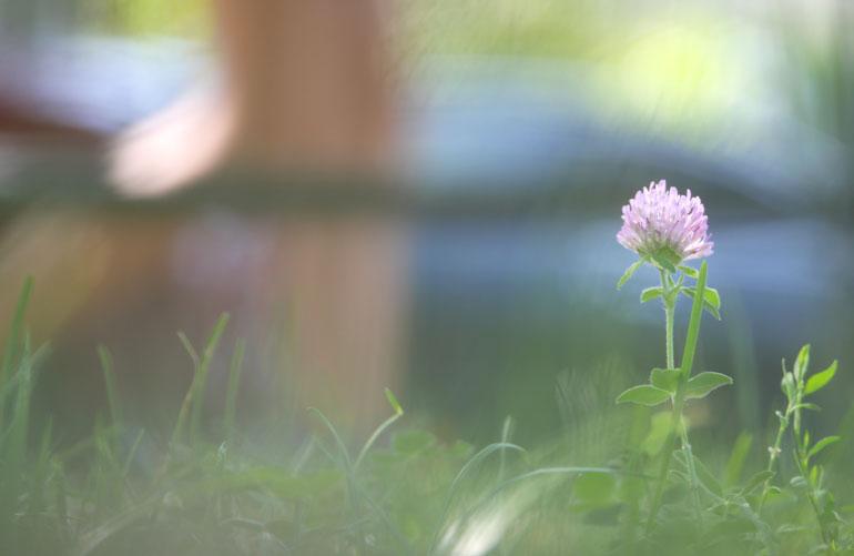 flower-good