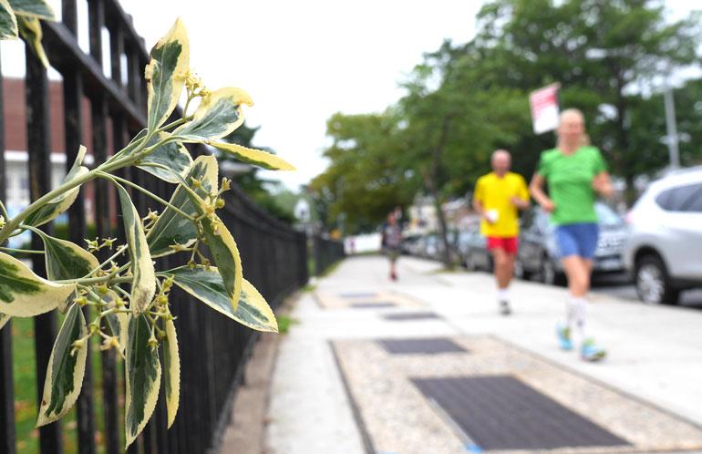 flower-jayasalini2