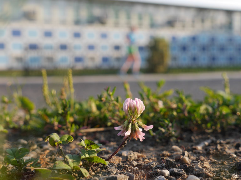 flower-nidhruvi