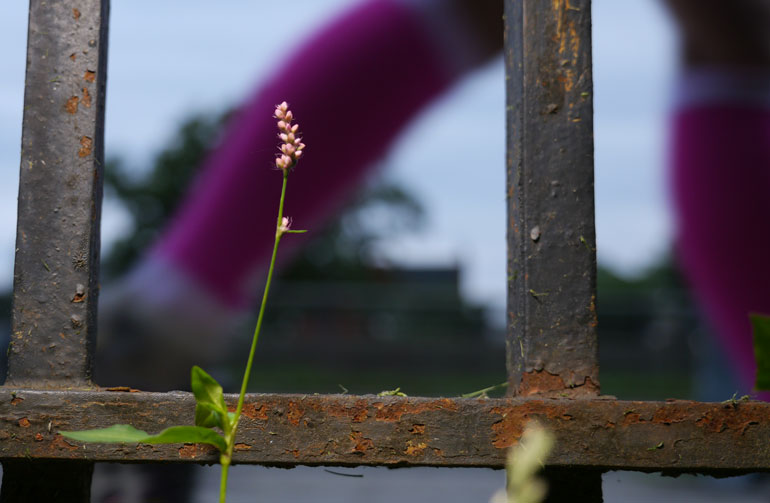 flower-nidhruvi2
