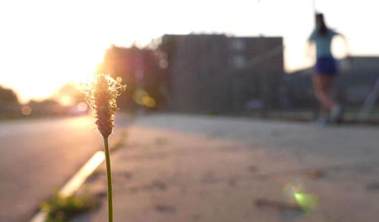 flower-sarah3