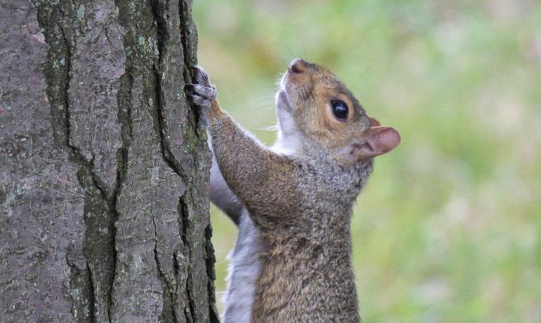 flower-squirrel5