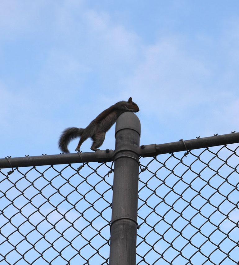 flower-squirrel6