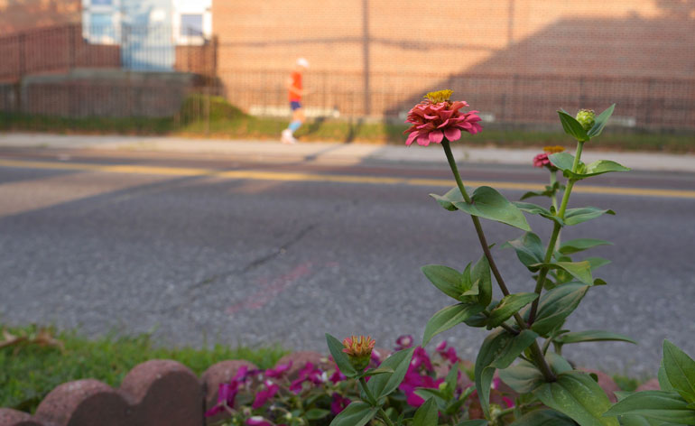 flower-teekshanam