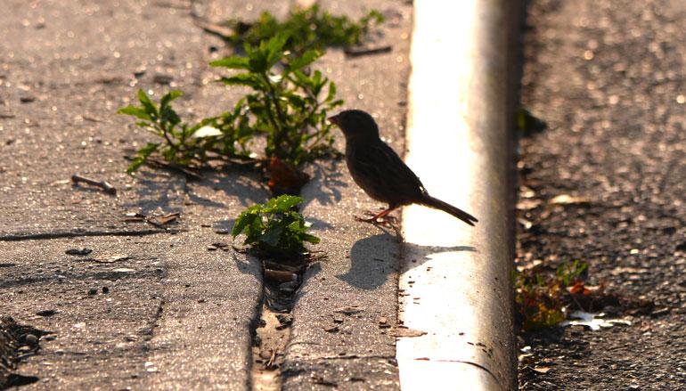 flowerbird5