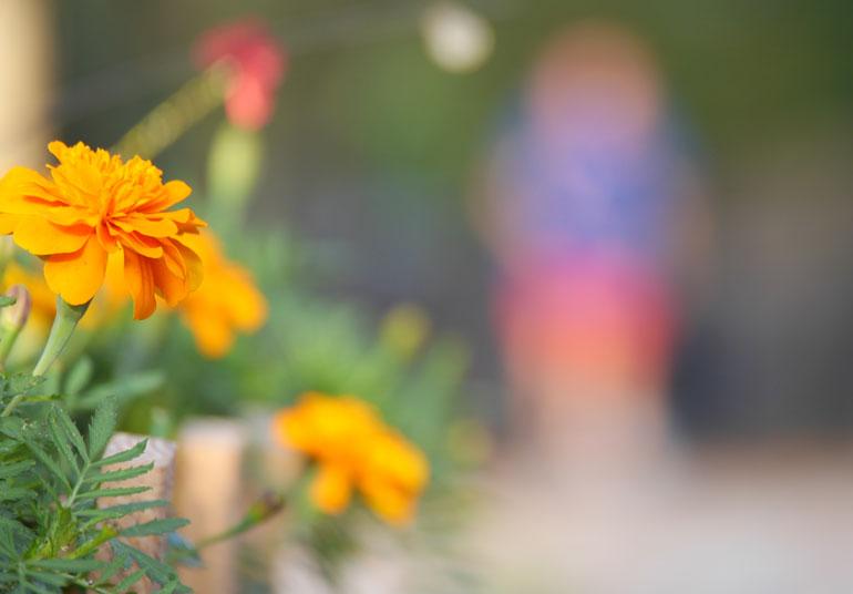flower-jayasalini3
