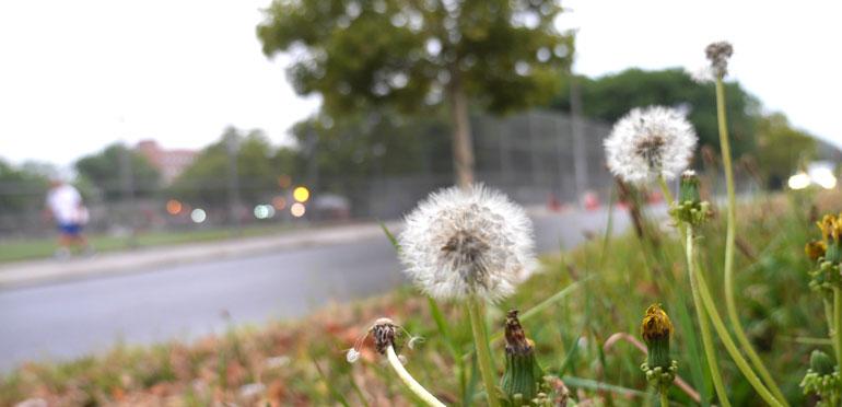 flower-ray3
