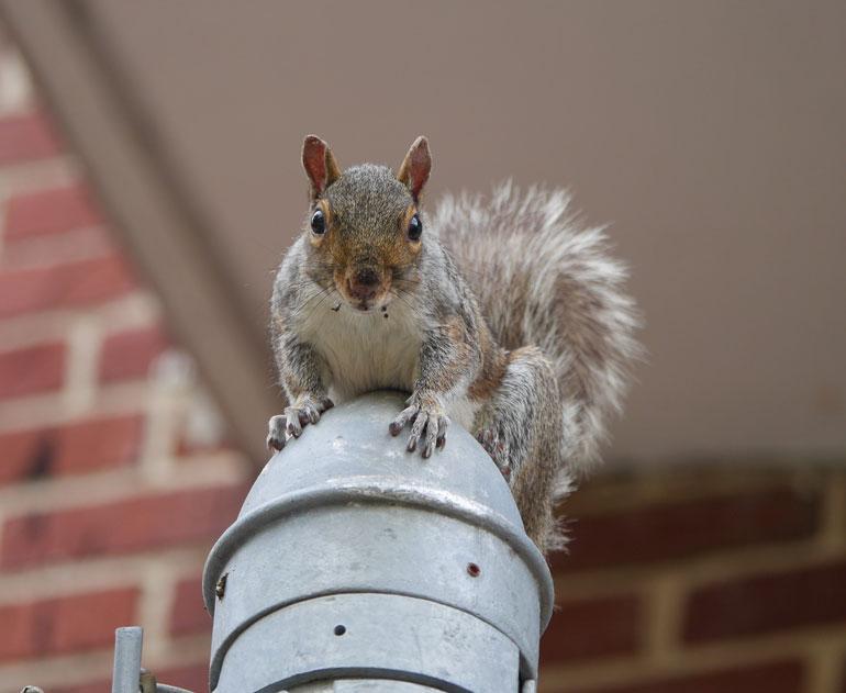 flower-squirre