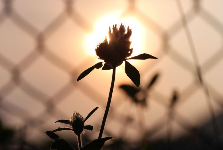 flower-sun3