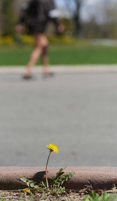flower-georgs