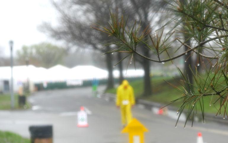 wet-tree