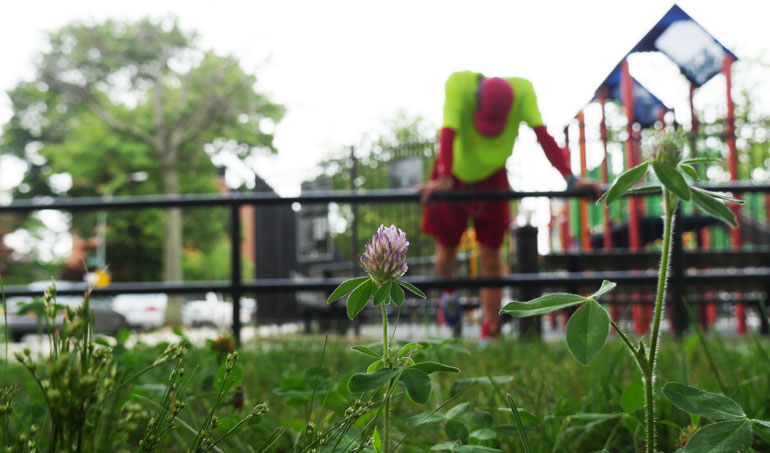 flower-baladev2