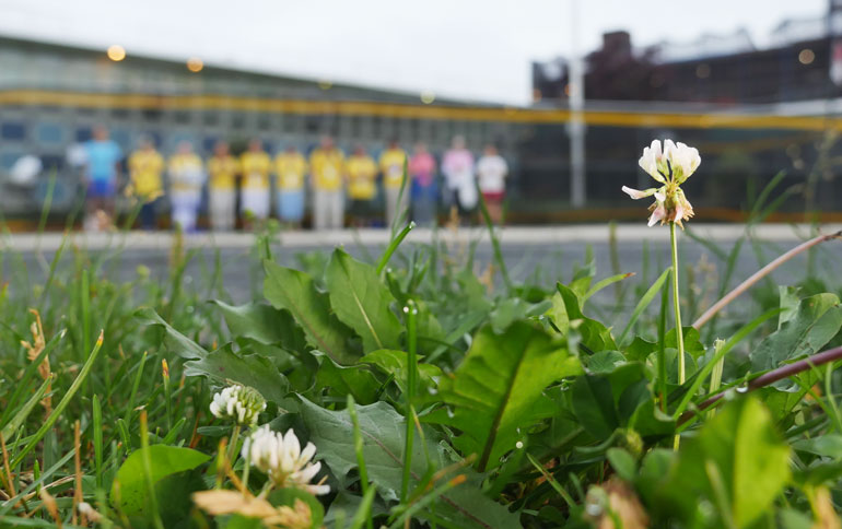 flower-parvati