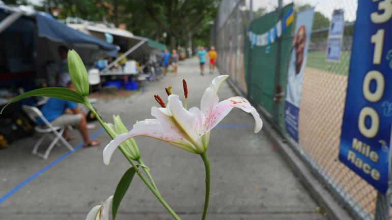 flower-galya