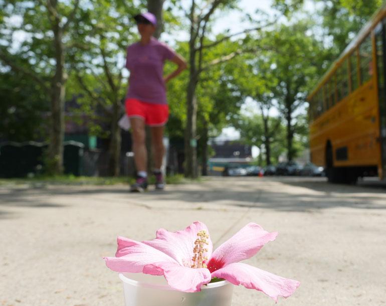 flower-kaneenika