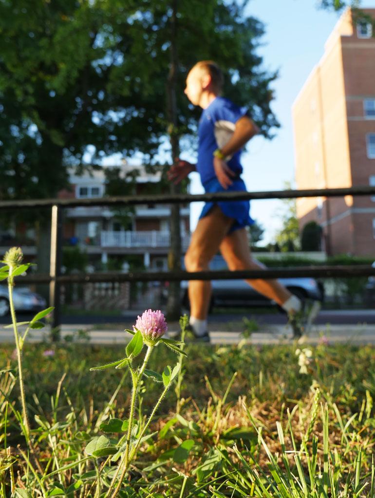 flower-stutisheel
