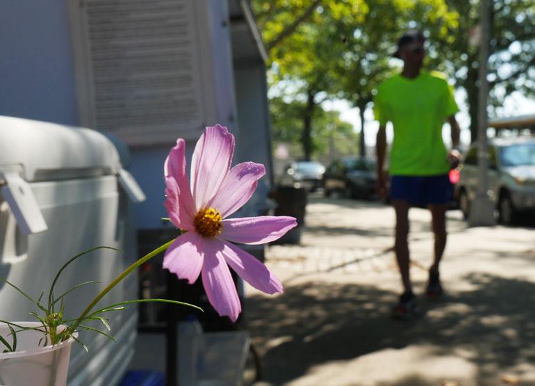 flower-baldev