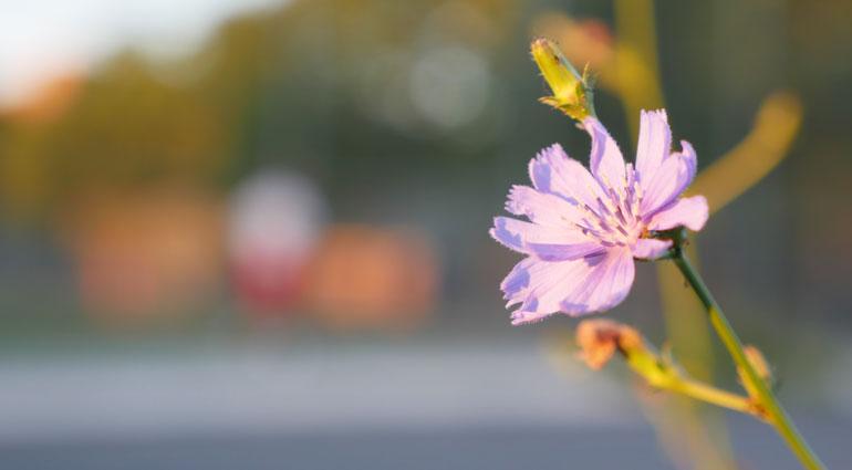 flower-final3