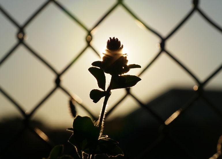 flower-sun