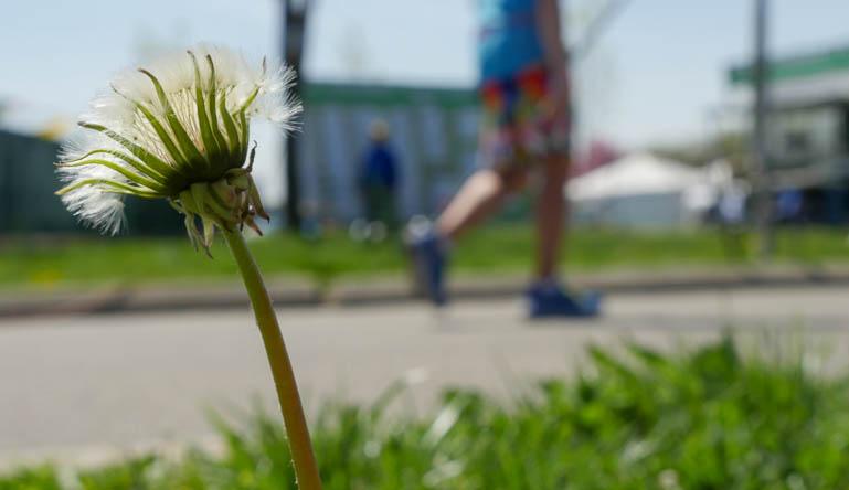 flower-1210756